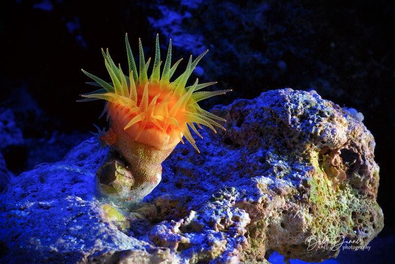 Reef shots