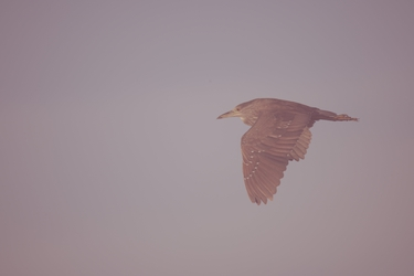 bird112.nef