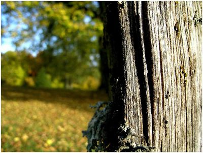 Dry wood in autumn