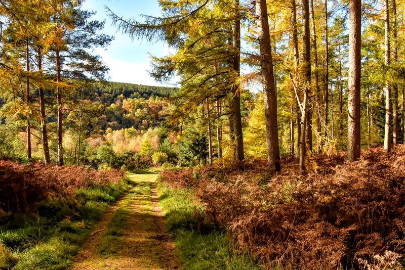 Armathwaite Forest_evening