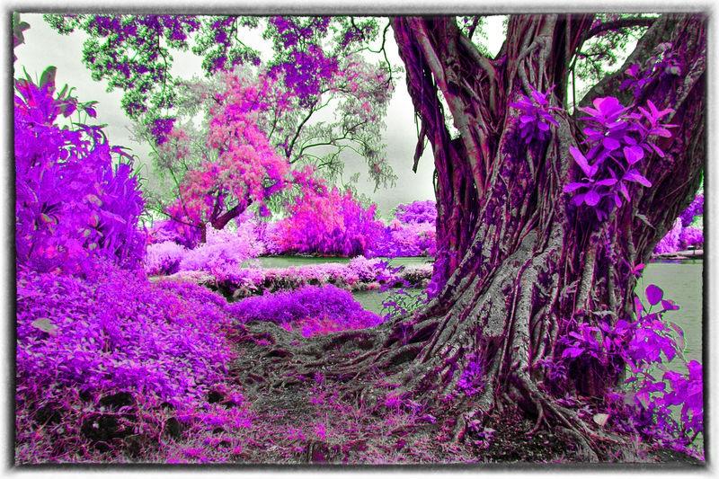 ANCIENT_TREE_0089