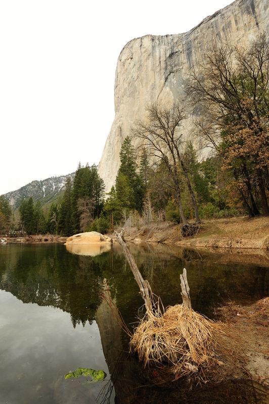 El Cap from meadow