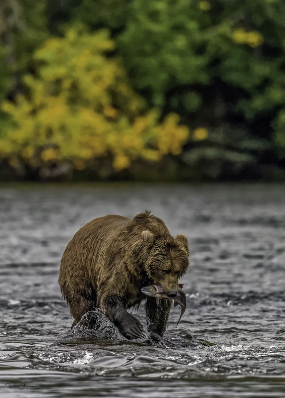 April Wildlife Contest –  Interacting with Water