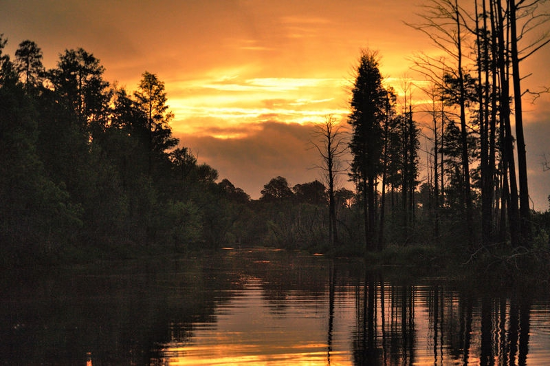 Okefenokee swamp sunrise