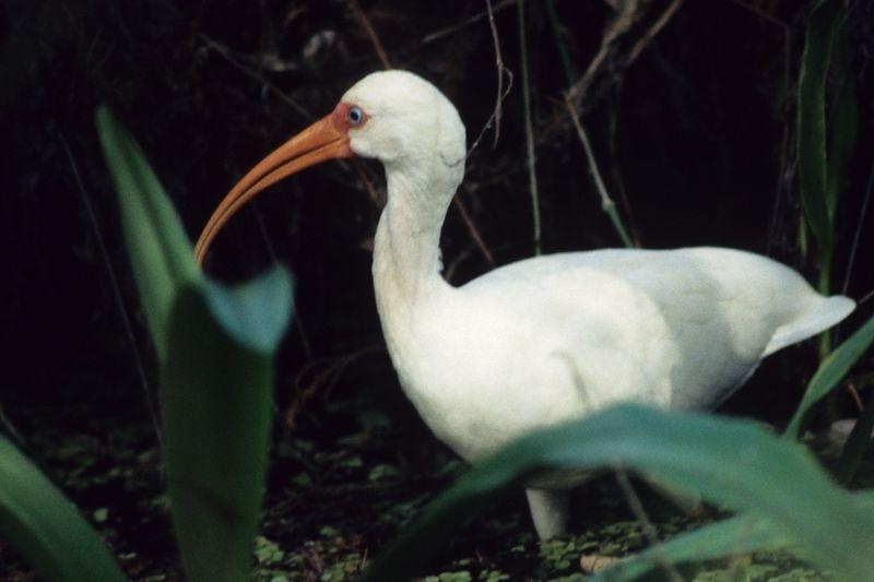 Egret-001