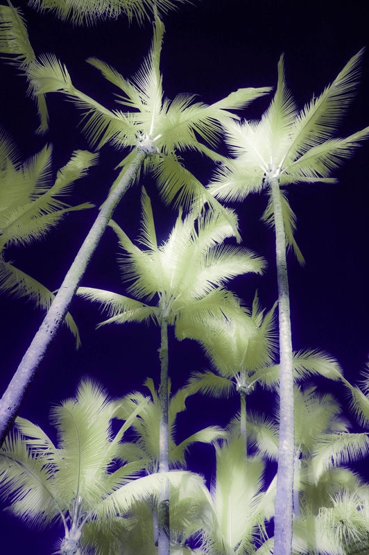 PALM_TREES2
