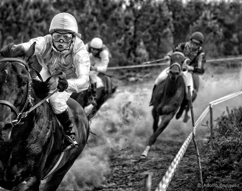 """""""Winning Horse"""""""