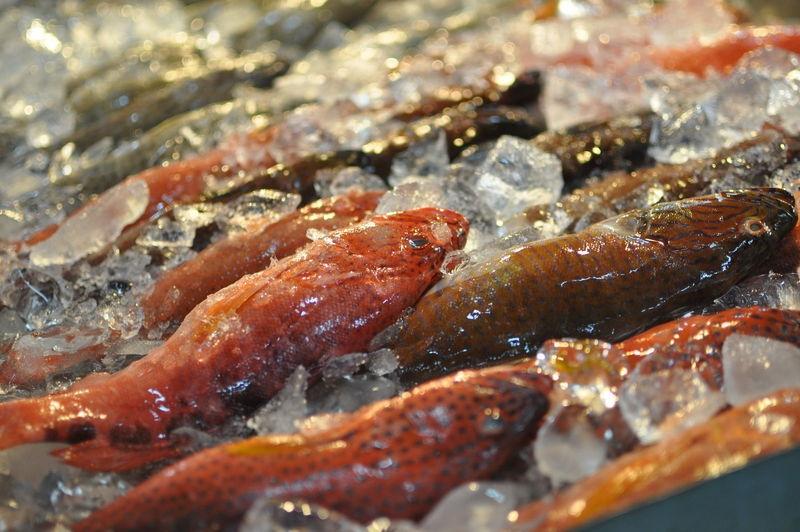 fresh_fishes