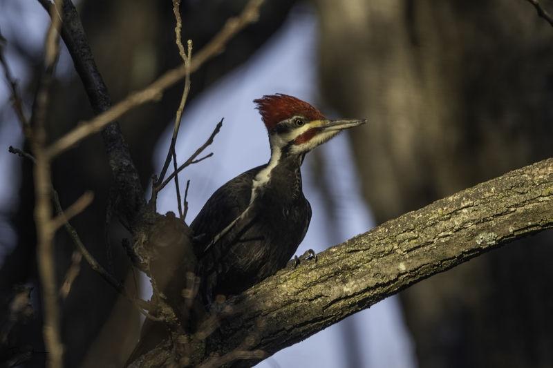 Teleconverters for Mirrorless Wildlife Photography