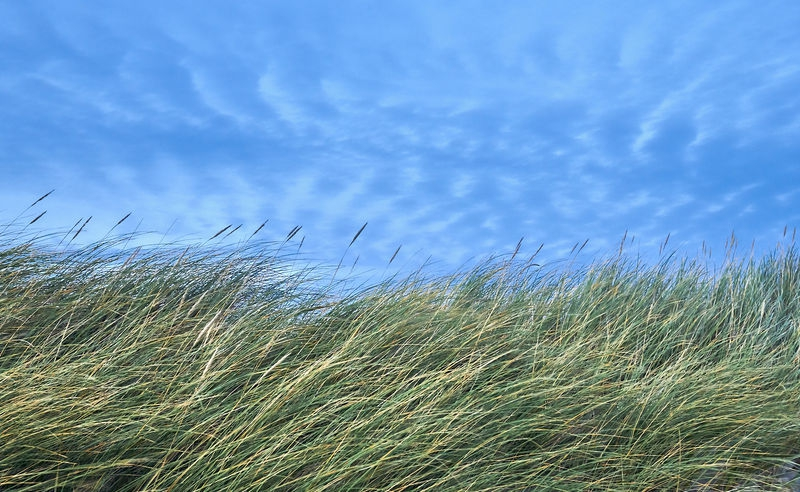 Grass, wind and clouds