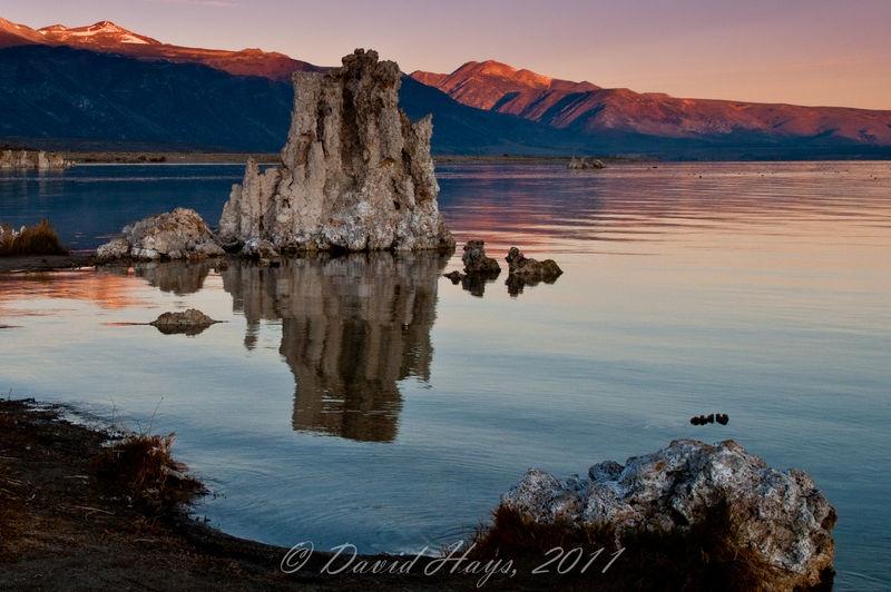Mono Lake and LOTS of ducks