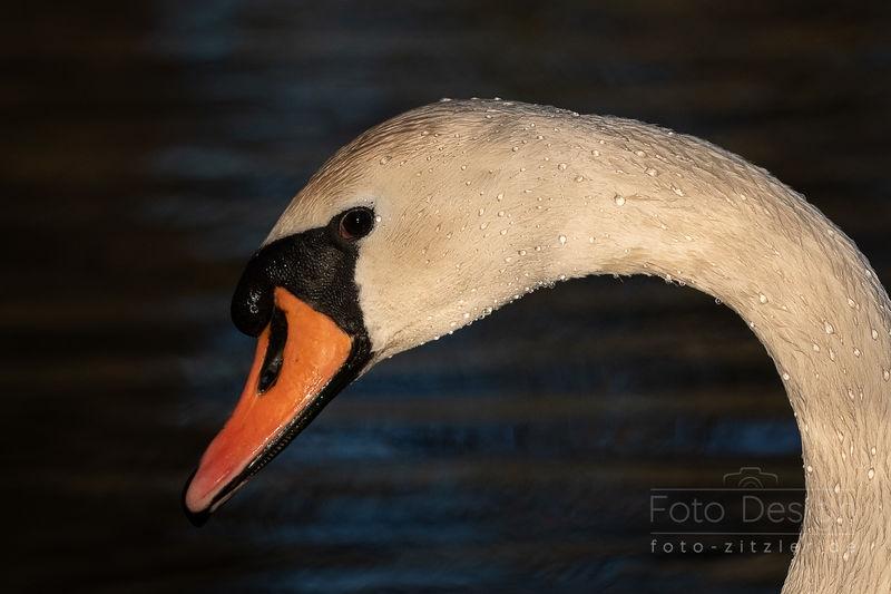 wet neck
