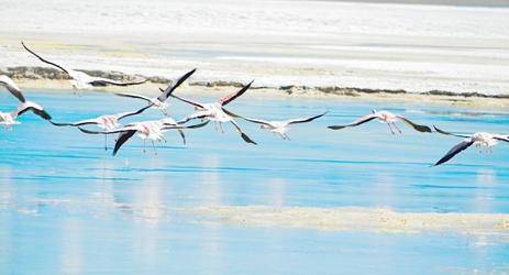 Flamingos5.tif
