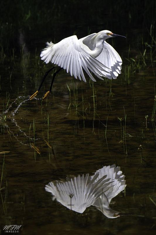 Reflective Take-off