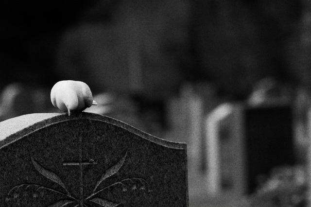 Bird of sorrow