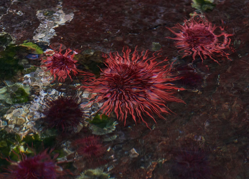 Sea urchins from above