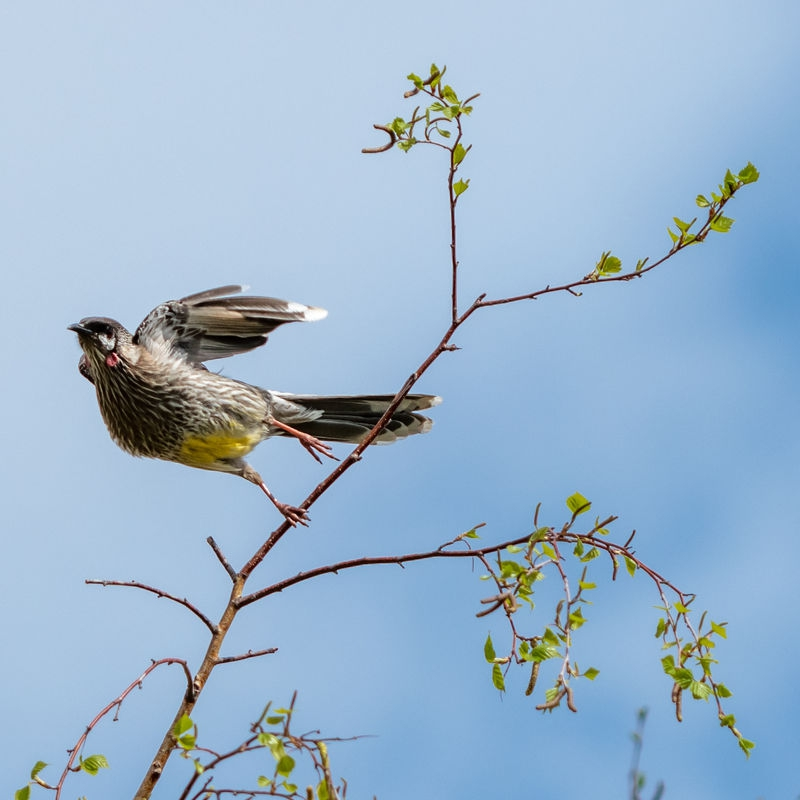 bird-16th_Sept-6.jpg
