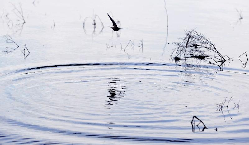 Flaying on the lake