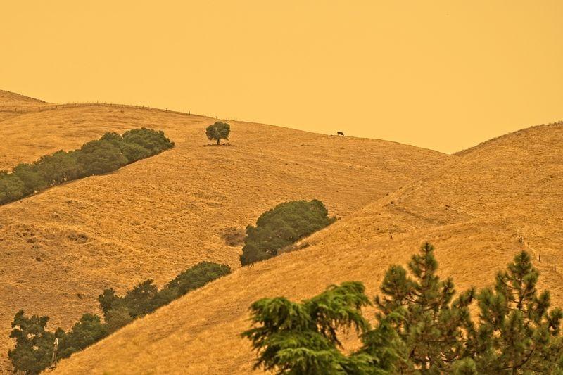 California Firelight