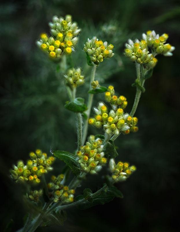 Big Sur:  Yellow Wildflowers