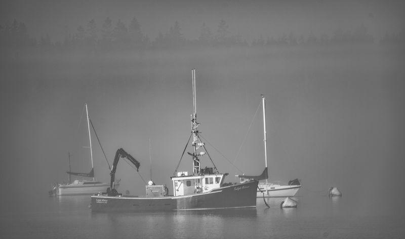 Fog Lifting - B&W