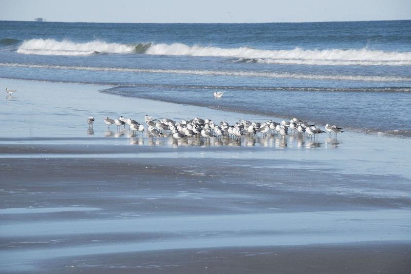 Birds of a Feather - Cocoa Beach, FL