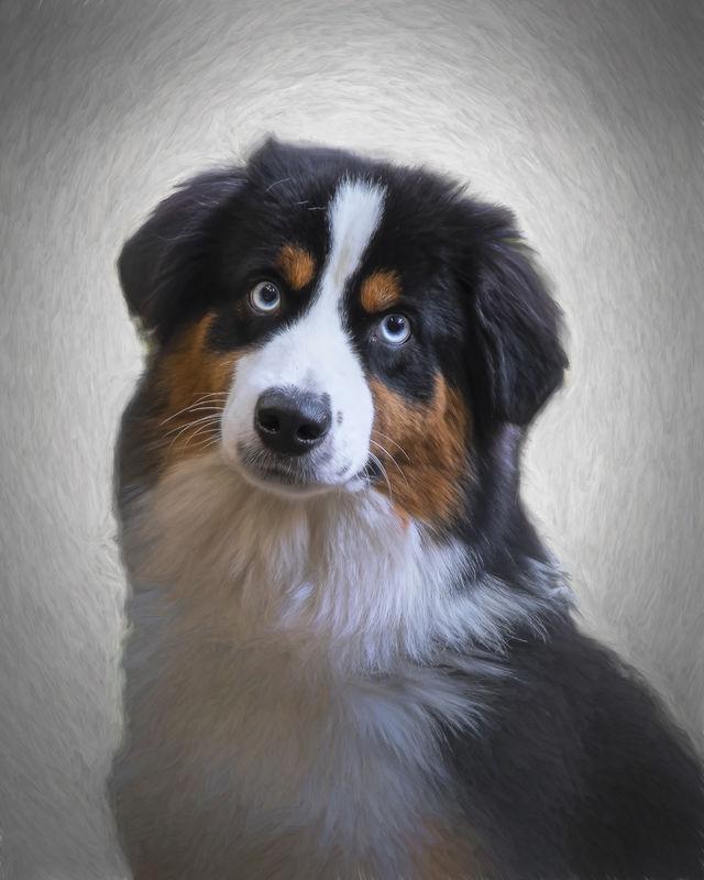 Adorable Pets - Teddy's Portrait