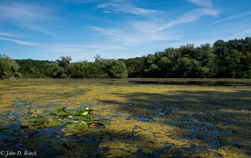 Mallard Lake #2