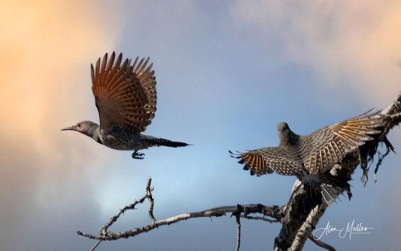 Flickers in flight