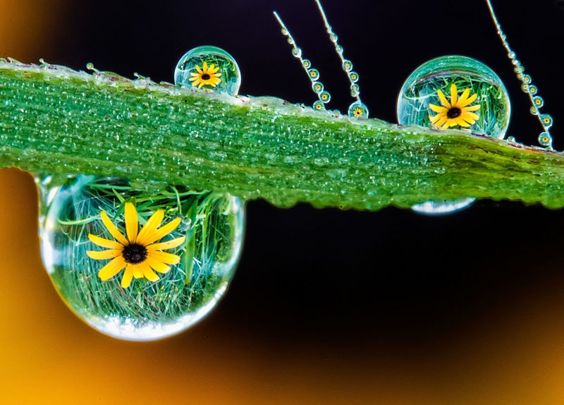 Dewdrops - Reflections