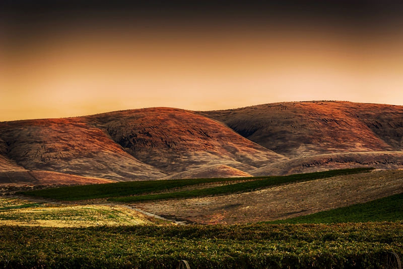 Dawn on Red Willow vineyard