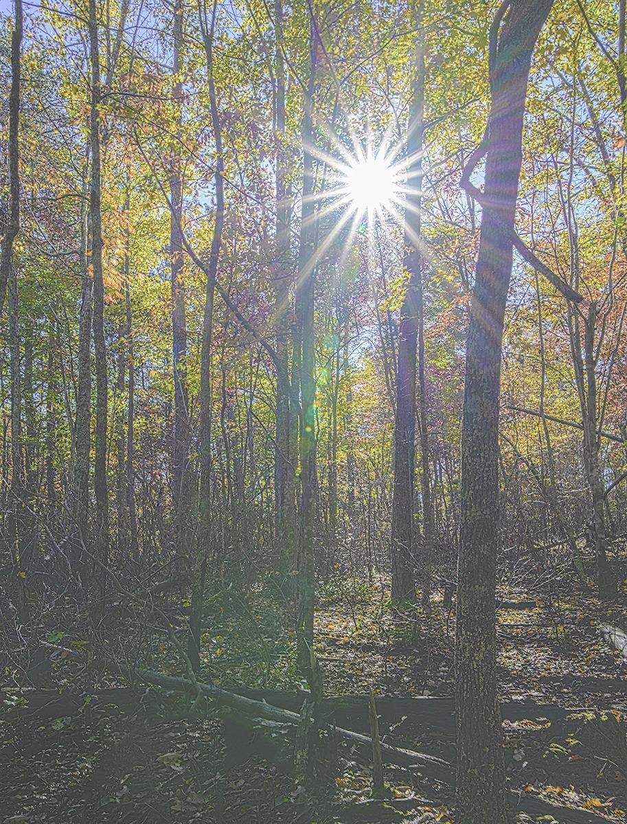 November Contest – Fall Foliage with Sky