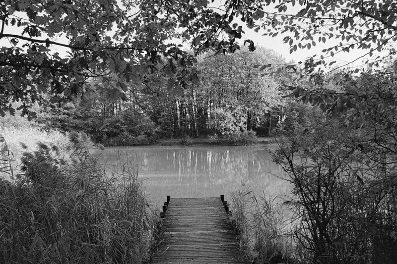 Pond_and_Wharf.jpg