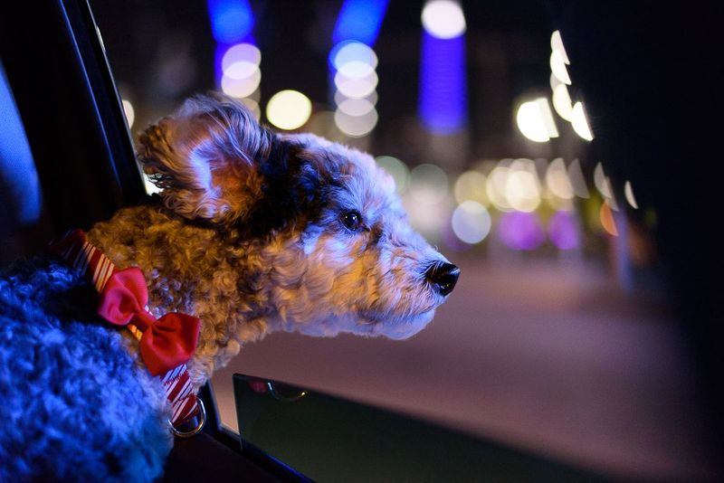 Sequential Shots - Riding in cars with dogs #3
