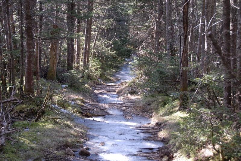 Trail to Mount Pierce - White Mountains, New Hampshire