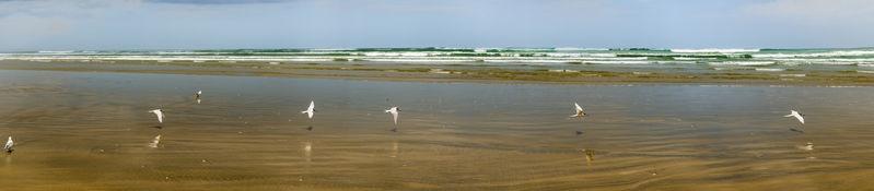 Birds at Ninety mile Beach