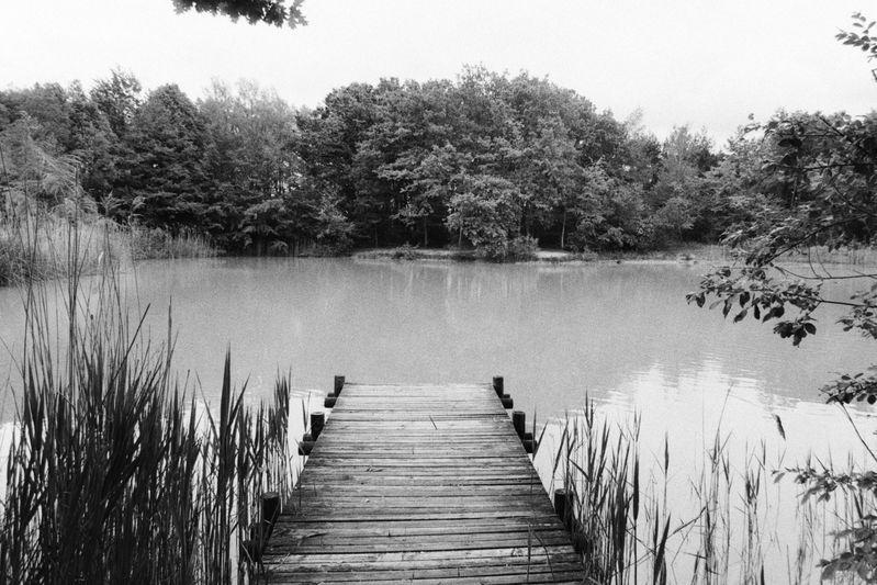 Pond_4.jpg