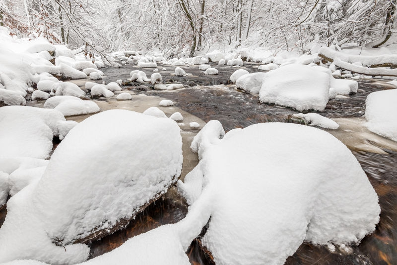 Snowy wonderland