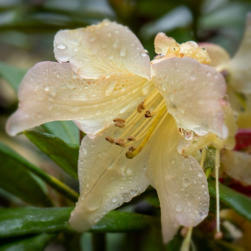 Enough of the Rhododendrons