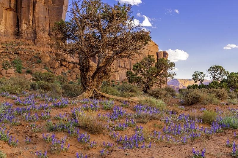 Trees & Wildflowers