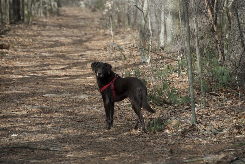 Olive at Greenways Trails - Wayland MA