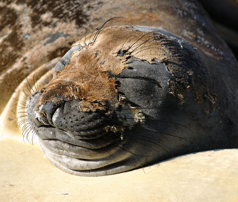 Another Sleeping Beauty, Big Sur Style