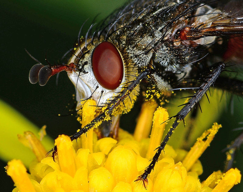 Fly in the Yard