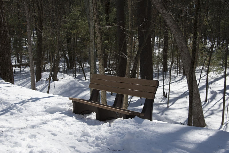 Bench Waiting for Spring