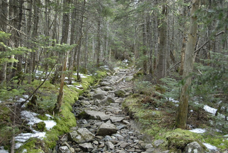 Trail along Crawford Path to Mount Pierce - White Mountains, New Hampshire