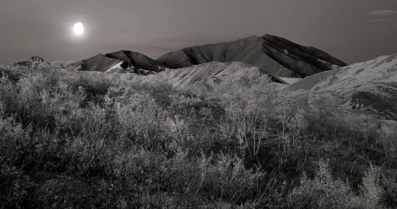 Denali Moonrise
