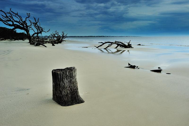 Driftwood Beach in Jekyll Island