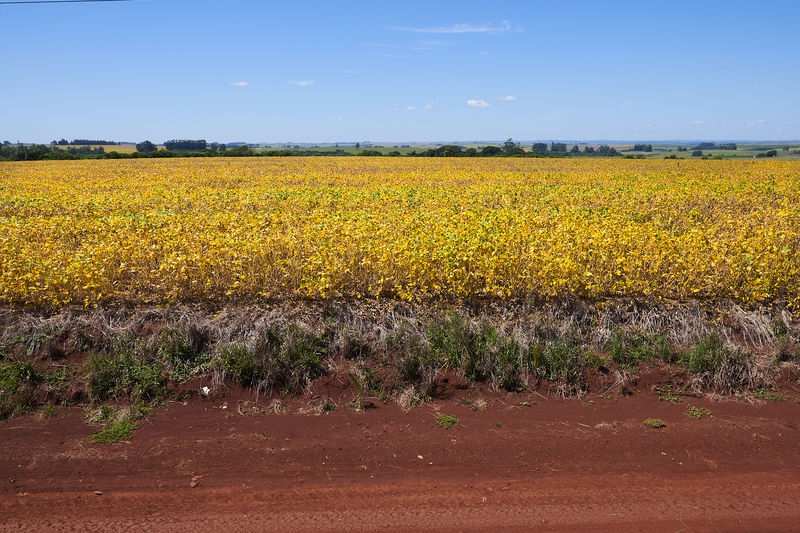 Soja fields Brasil