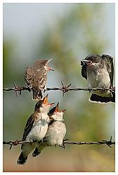 Birds Eating (dclarhorn)
