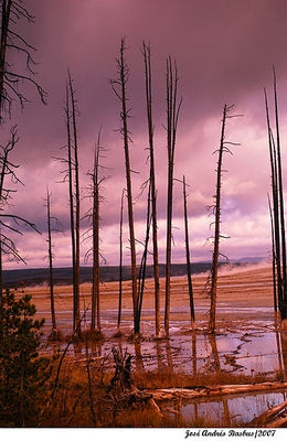 tree reflection in Yellowstone